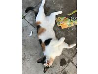 5 cats need rehoming ASAP
