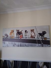Canvus staffishire dogs