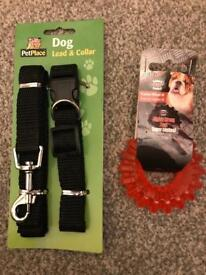 dog collar and toy