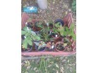 potted plants joblot
