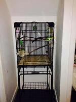 White budgie with large cage