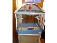 Young Budgies with new cage.two male.due to ill health.
