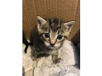 2 Kittens left!