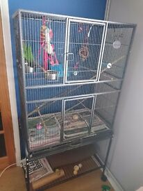 Hand tame conure and cage