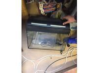 Cold water Fish Tank.