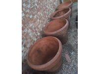 Huge flowers pots