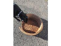Dog Basket Weaved