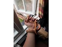 Stunning amel corn snake with vivarium and accessories