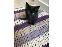9 week old kitten- £20 - already had first injection and second paid for. Must go to loving family