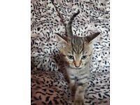Cute kittes
