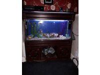 3 foot aquarium full set up must see