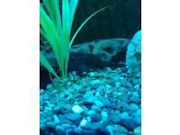 Juwel 260 litre fish tank