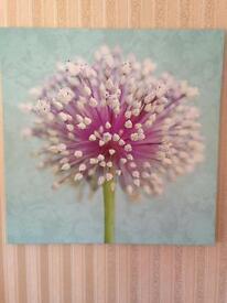 Large Allium Canvas