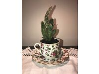Tea Cup Catus - Great Christmas Gift!