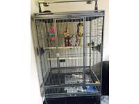 Very large Antique colour parrot cage