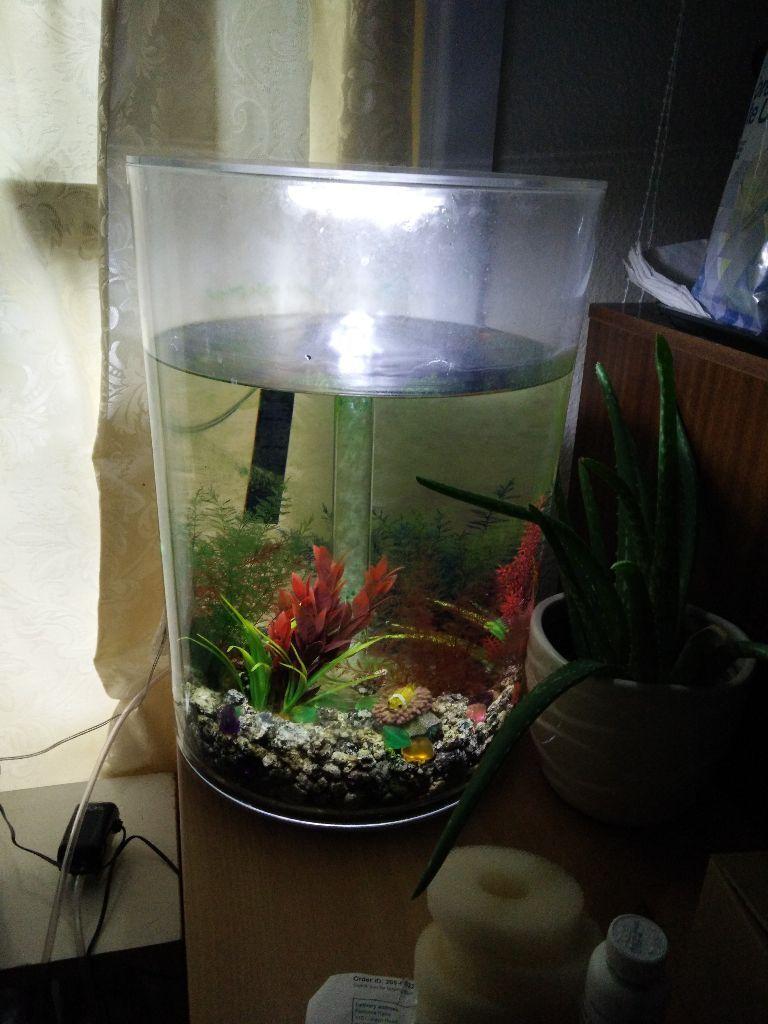 Aquarium fish tank northamptonshire - Biorb Biube Pure Aquarium 35 Litre Clear Intelligent 24hr Led Light