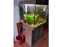 220L cube fish tank aquarium. Comes with a heater and fluval u4 filter. Tank and stand.