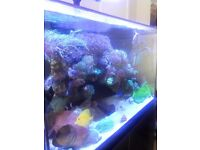 RED SEA MAX E-SERIES 260 - FISH TANK MARINE CORAL REEF 2 HYDRA WI-FI LED LIGHT FULL SET UP FOR SALE