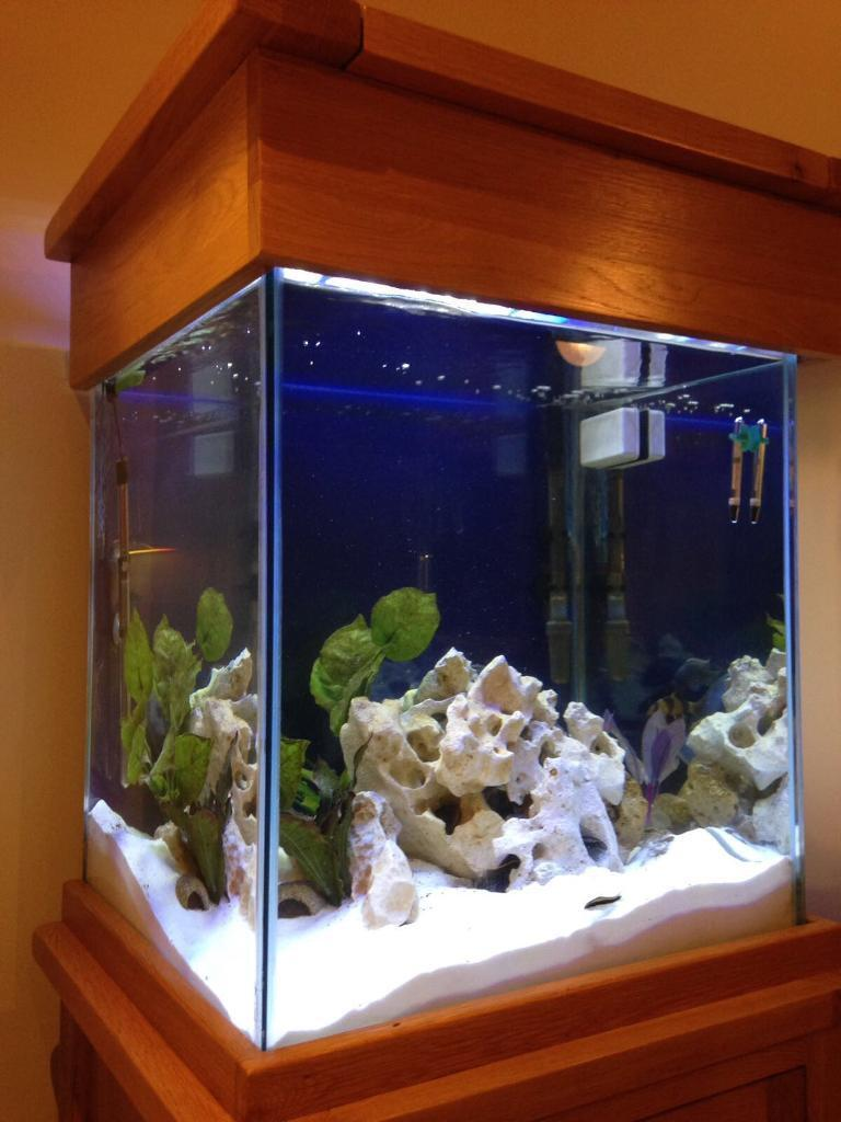 Fish Tank Solid Oak Cabinet With Cupboard