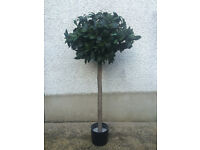 Lovely Artificial Bay Tree With Real Wooden Trunk
