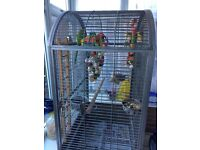 Indian Ringneck Parrot,comes with cage and toys.