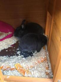 Grey male rabbit (with new 100 cm indoor cage) for loving home 🐰ls8
