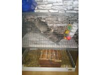X2 Chinchillas complete with 2 story cage bath house