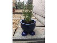 2 BLUE PLANT POTS 18H X 23D WITH DRAINAGE FEET AND PLANT