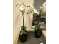 TWO TALL PLASTIC FLOWERS IN POTS 65CM HIGH FOR DISPLAY