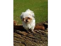 missing dog tilly please call 07575687132 reward waiting