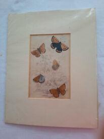 Antique/Vintage Victorian Hand Coloured Butterfly Print - Plate 29 - 1835 Jardine/Duncan/Lizars