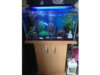 Fish tank ( full setup)