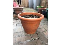 Plastic pot with dahlia