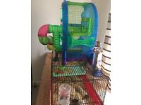 3 dwarf hamsters with extras