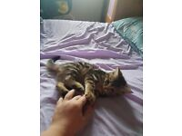 4 kittens looking for new home