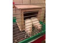 Two Girl Rats