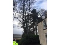 Tree surgeon/ ground worker required