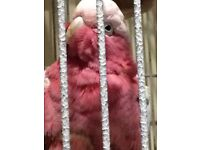 Gorgeous super tame galah cockatoo parrot, with large cage. 6 year old male