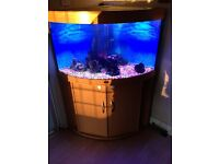 190 lt corner fish tank
