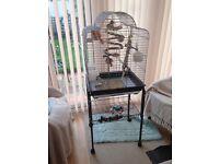 Bird cage ) cockertial--£60