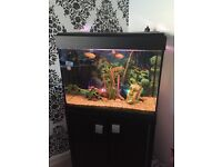 £50 Tropical Fish Tank including fish compleate set up with extras