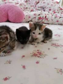 I have 3 nice kittens who cares pounds