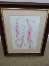 Original Foxglove Watercolour