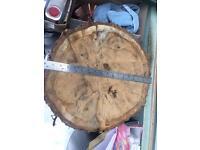 Oak tree stump