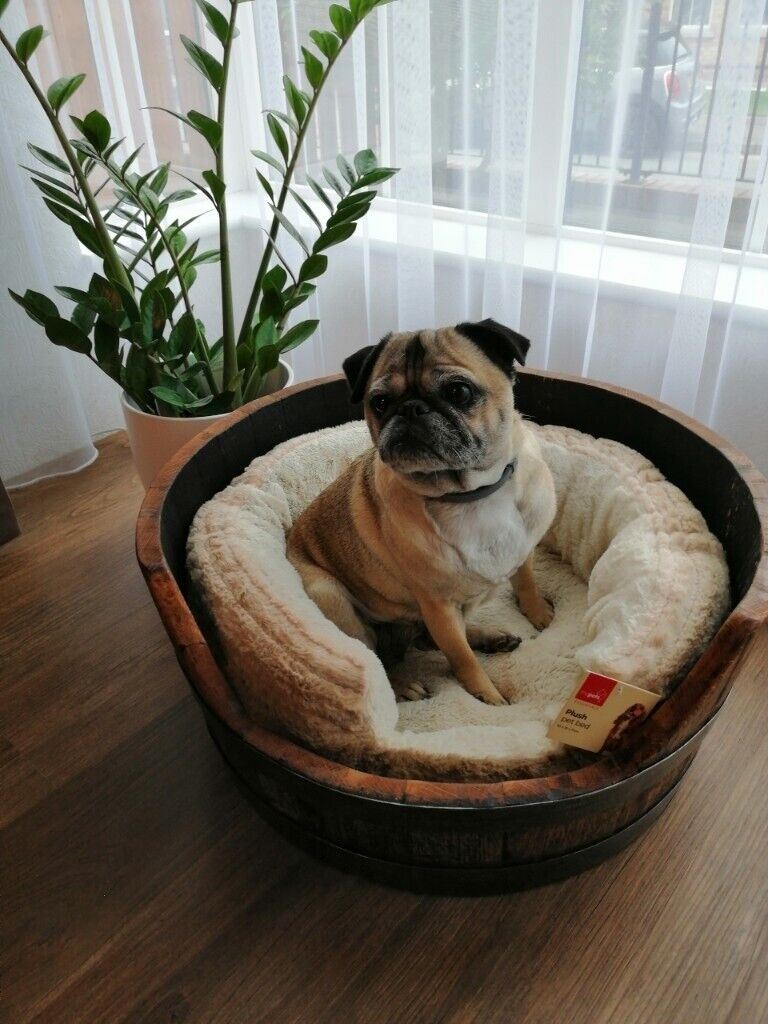 Barrel Dog Bed New In Craigavon County Armagh Gumtree