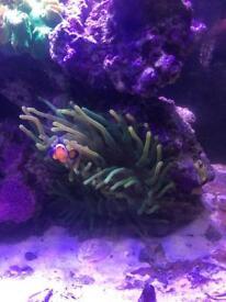 Marine fish tank (full setup)
