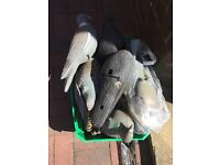 Pigeon Decoys and Cradles