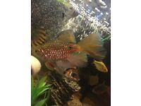 for sale tropicall fish