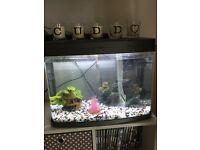 40L fish tank/aquarium