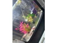 40L Fish tank for sale (Does Not include fish)